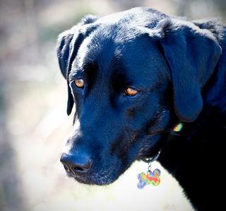 Earl Doggo