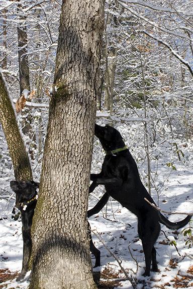 Tree'd