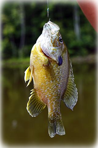 Chase fish