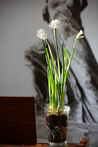 Paperwhites for me