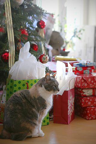 Kittychristmas