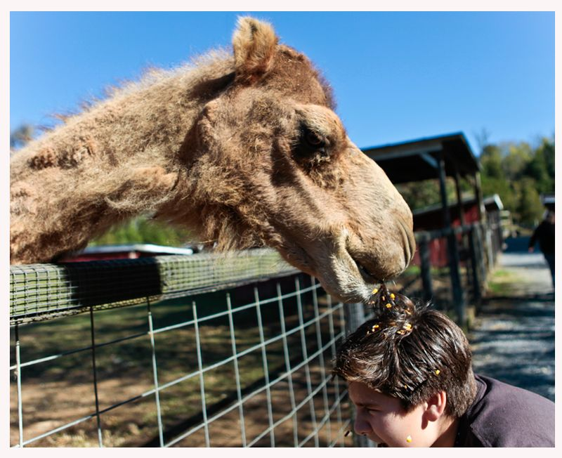 Camelbiting