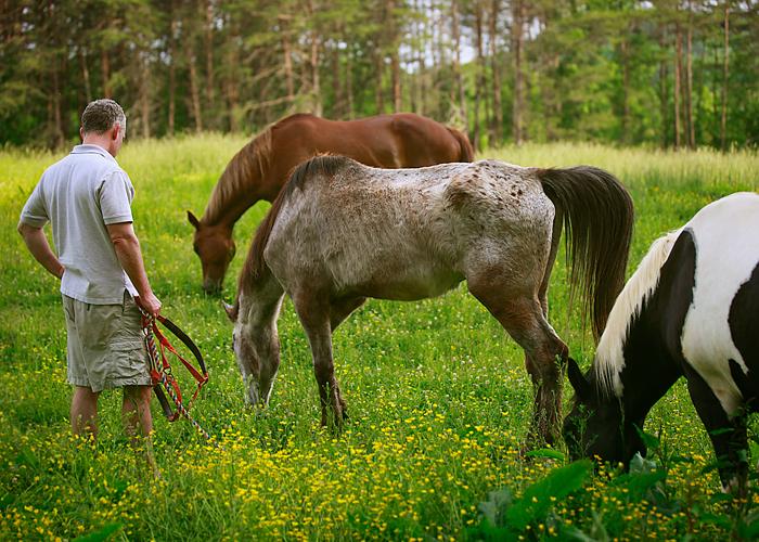 Allthreehorses