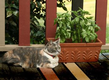 _baby_the_cat