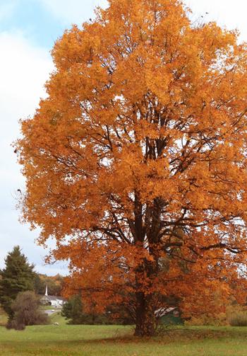 _blog_autumn