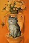 Kittytuesday