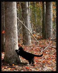 _blog_cat_scratcher