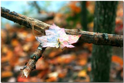 _blog_leaf