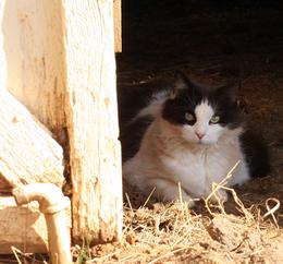 _barncat