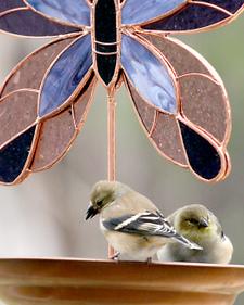 Bird1finches