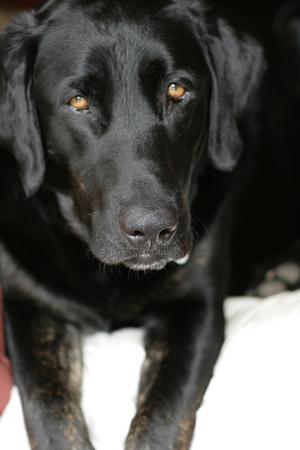 _earl_doggo
