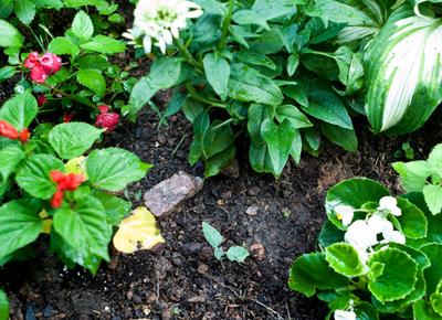 _garden
