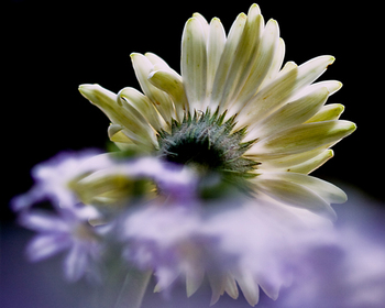 Blooms_on_blog_2
