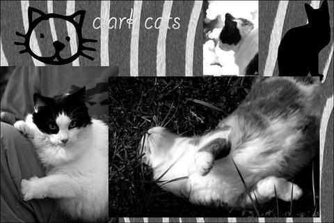 _clark_cats