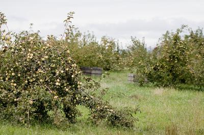 _orchard_blog