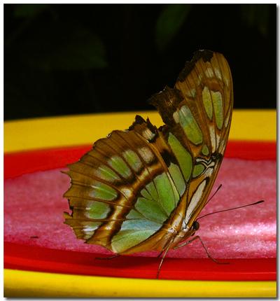 _butterfly_website
