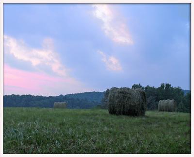 _hayfields
