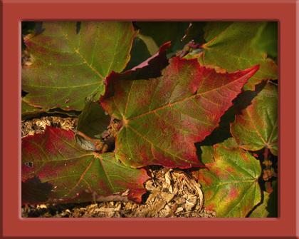 _leaf