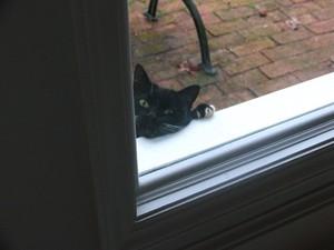 A_peeping_tom