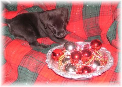 Christmasearl