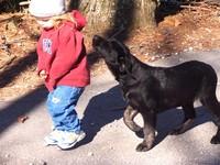 Dog_wants_pepperoni