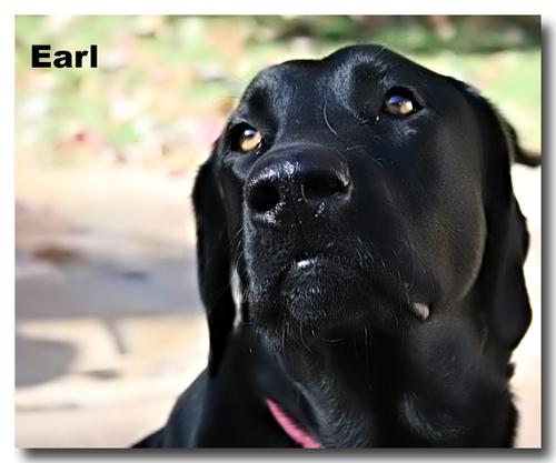 Earl_2