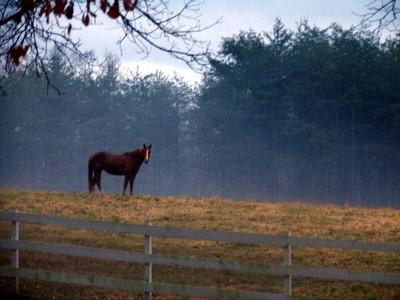 Pasture_mist
